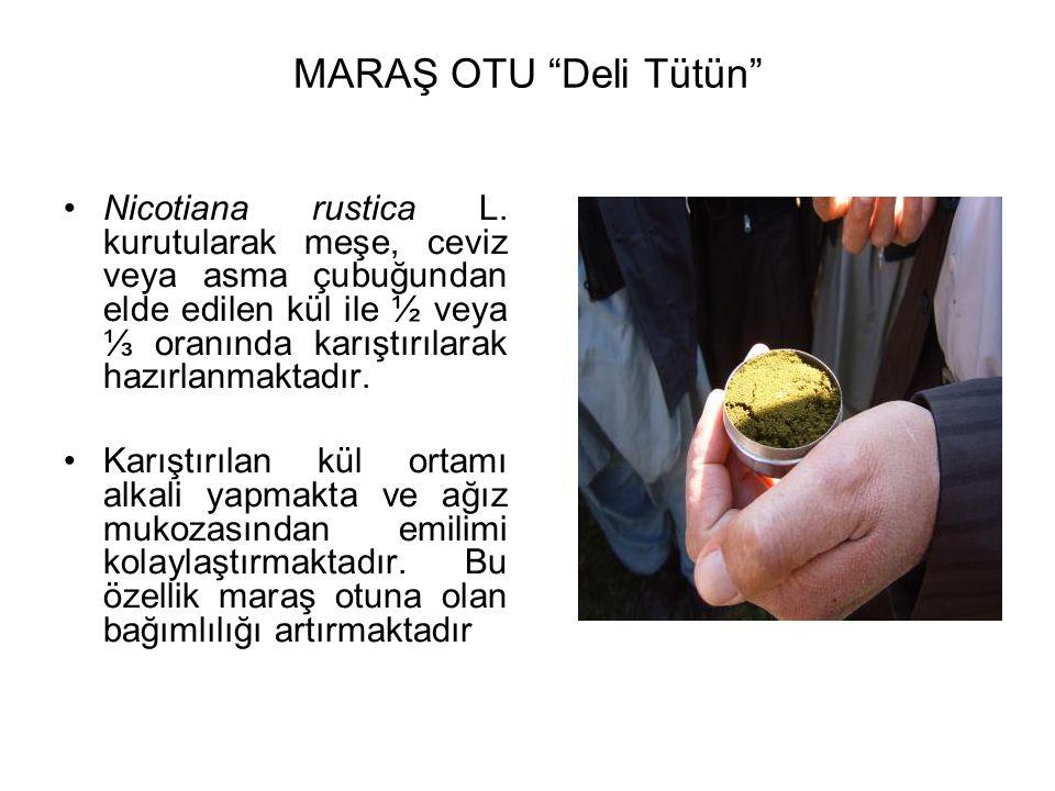 """MARAŞ OTU """"Deli Tütün"""" Nicotiana rustica L. kurutularak meşe, ceviz veya asma çubuğundan elde edilen kül ile ½ veya ⅓ oranında karıştırılarak hazırlan"""