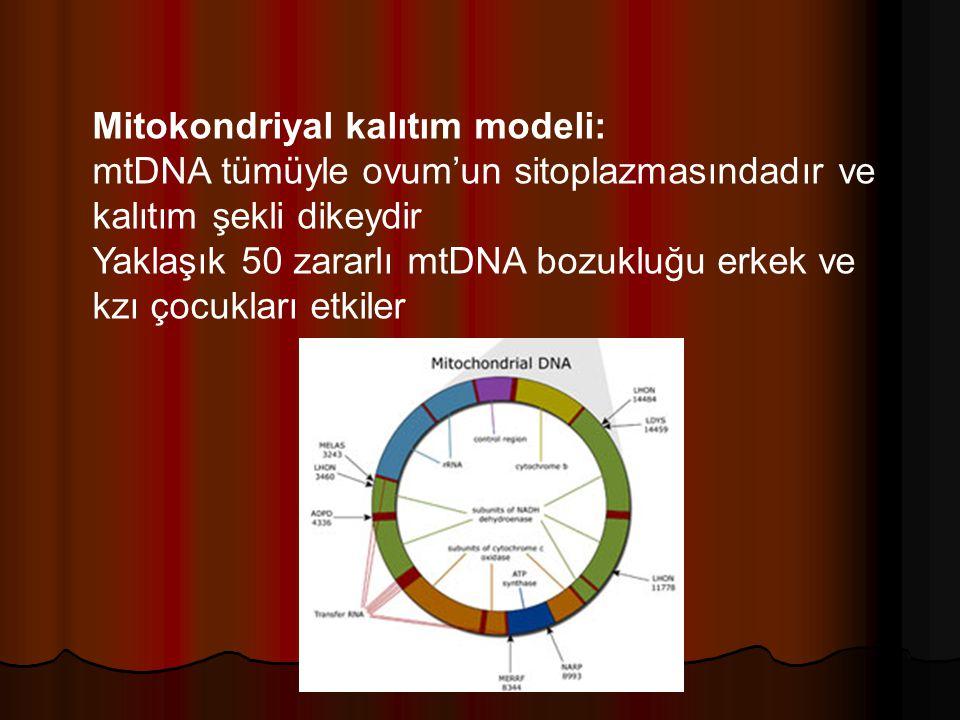 Mitokondriyal kalıtım modeli: mtDNA tümüyle ovum'un sitoplazmasındadır ve kalıtım şekli dikeydir Yaklaşık 50 zararlı mtDNA bozukluğu erkek ve kzı çocukları etkiler