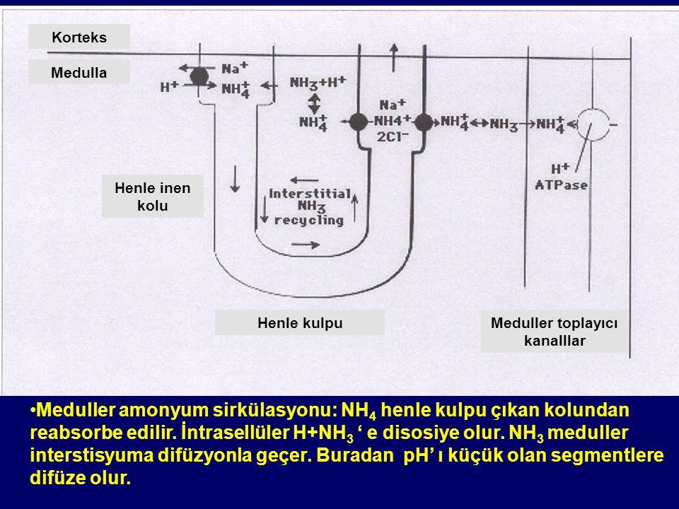 Renal Tübüler Hastalıklar 1.Tanım 2.Renal Tübüler Fonksiyonlar 3.Renal Tübüler Hastalıklar –Proksimal tübüler hastalıklar –Distal tübüler hastalıklar –Toplayıcı kanal hastalıkları