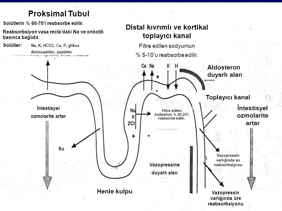 Peritubuler Kapiller Proksimal tubul hücresi Tubuler lümen Toplayıcı tubul hücresi Peritubuller kapiller Basolateral membran Luminal membran Basolateral membran Proksimal ve toplayıcı kanallarda HCO 3 reabsorbsiyonu