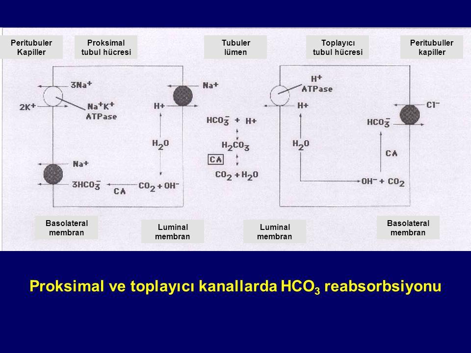 Proksimal tubul hücresi Peritubuller kapiller Tubuler lümen Toplayıcı tubul hücresi Peritubuller kapiller ve intestisyum Proksimal ve toplayıcı kanallarda NH 4 sekresyonu Her NH 4 sekresyonunda HCO 3 üretilir ve peritübüler alana geçer.