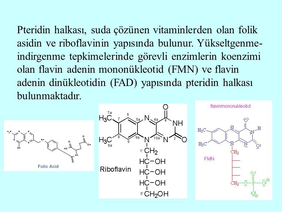 Pteridin halkası, suda çözünen vitaminlerden olan folik asidin ve riboflavinin yapısında bulunur. Yükseltgenme- indirgenme tepkimelerinde görevli enzi