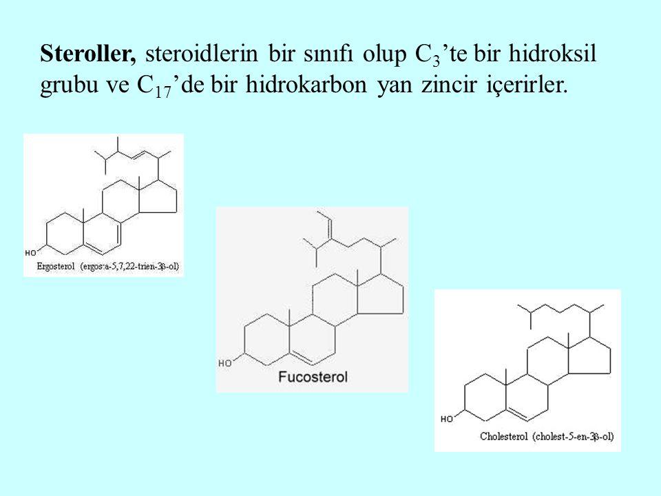 Steroller, steroidlerin bir sınıfı olup C 3 'te bir hidroksil grubu ve C 17 'de bir hidrokarbon yan zincir içerirler.