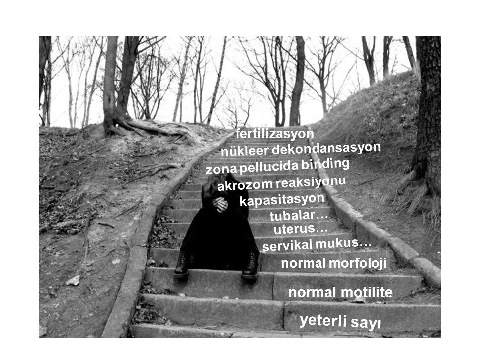 Sonuçlar Erkek faktörü hakkında –bildiklerimiz arttıkça bilemediklerimiz artıyor – bilebildiklerimiz le bugünkü tıbbı uygulamaktayız Semen parametreleri –Fertiliteyi öngörmez Nasıl öngörebilir.