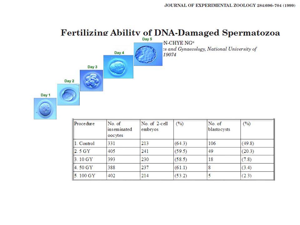 –Postkoital testteki servikal mukusta veya zona pellusida yüzeyindekilerse > % 30 (WHO 1999) –İdeal morfolojik katı kriterlere uymaksa ilk tanımlanma > % 14, daha sonra > % 4 –WHO 2010 > % 4 Normal .
