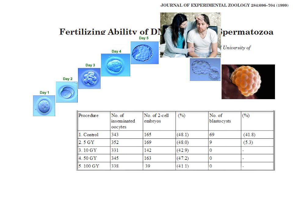 yeterli sayı normal motilite normal morfoloji servikal mukus… uterus… tubalar… kapasitasyon akrozom reaksiyonu zona pellucida binding nükleer dekondansasyon fertilizasyon ductus ejakülasyon spermatogenez Erkek yeterli volüm