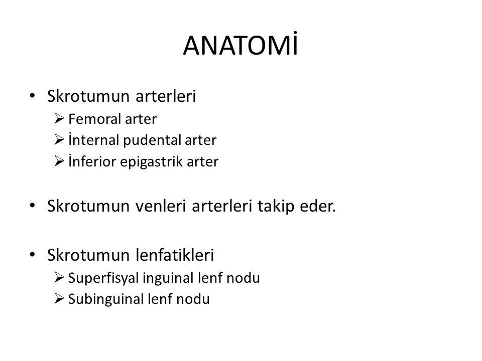 ANATOMİ Skrotumun arterleri  Femoral arter  İnternal pudental arter  İnferior epigastrik arter Skrotumun venleri arterleri takip eder. Skrotumun le