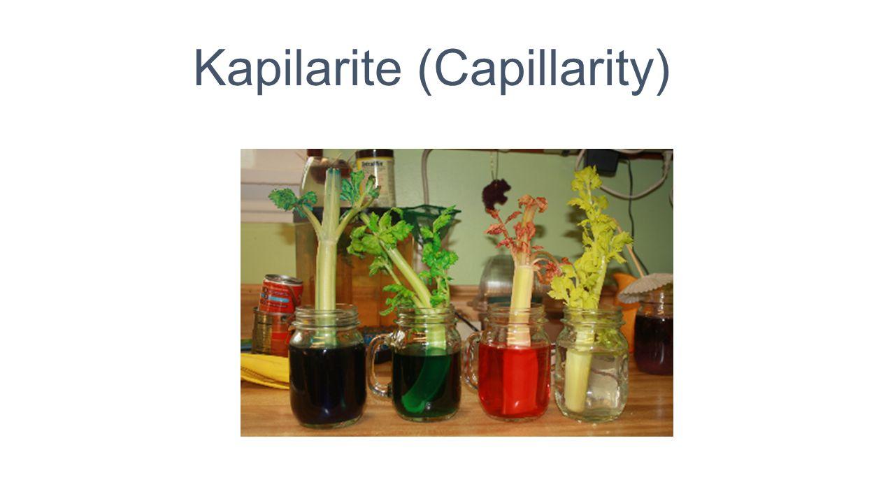 Kapilarite (Capillarity)