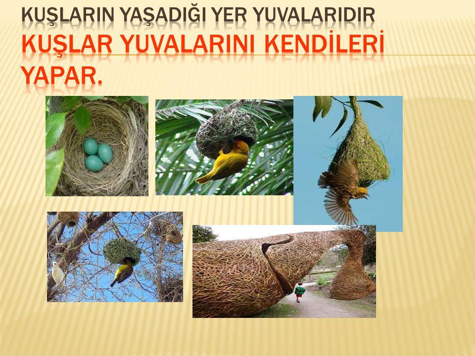  Solucan yuvaları