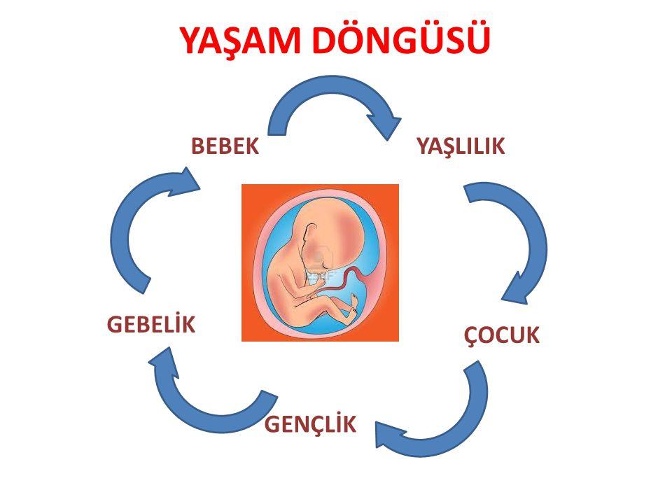 Besin değeri yüksek olan SÜT bebeklikte,çocuklukta,gençlikte ve ileri yaşlarda yani her dönemde vazgeçilmezdir.