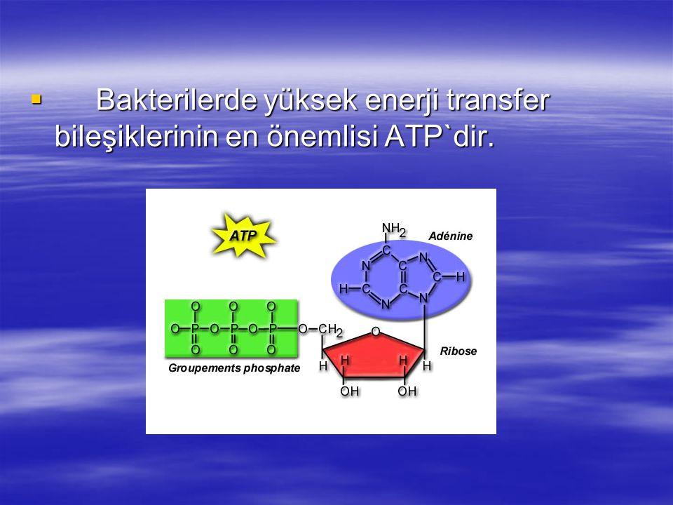  Bakterilerde yüksek enerji transfer bileşiklerinin en önemlisi ATP`dir.