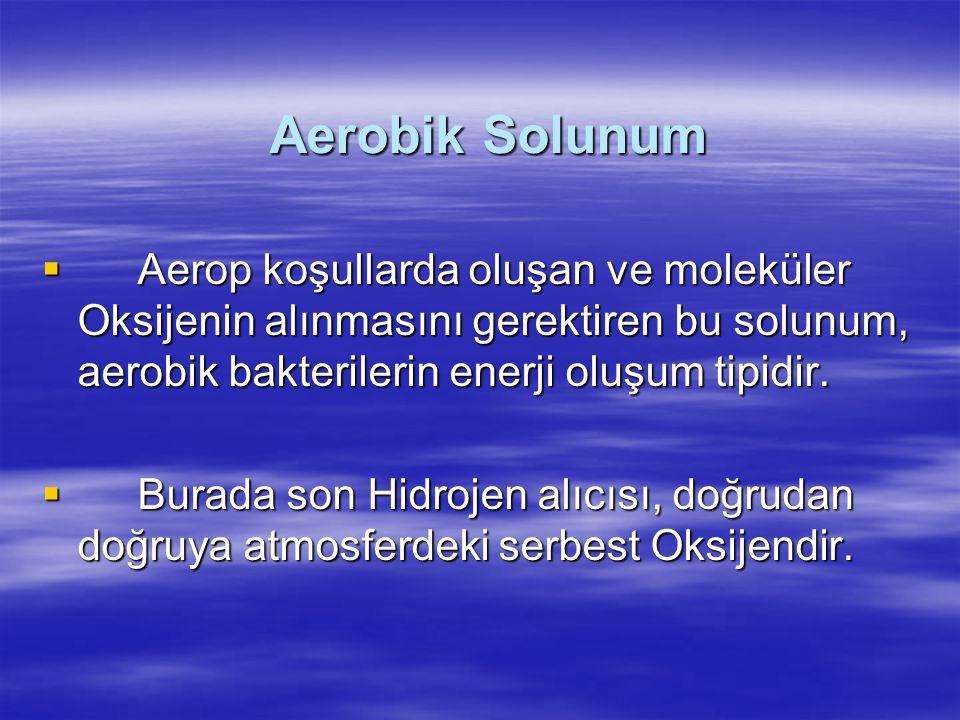 Aerobik Solunum  Aerop koşullarda oluşan ve moleküler Oksijenin alınmasını gerektiren bu solunum, aerobik bakterilerin enerji oluşum tipidir.