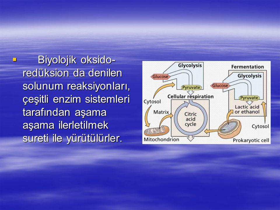  Biyolojik oksido- redüksion da denilen solunum reaksiyonları, çeşitli enzim sistemleri tarafından aşama aşama ilerletilmek sureti ile yürütülürler.