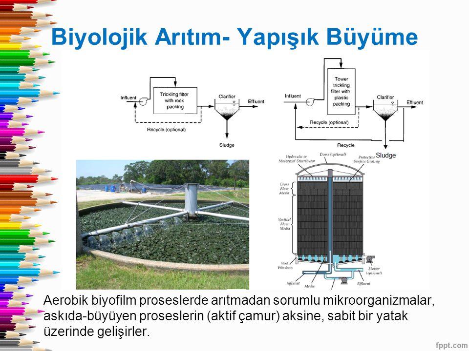 Biyolojik Arıtım- Yapışık Büyüme Aerobik biyofilm proseslerde arıtmadan sorumlu mikroorganizmalar, askıda-büyüyen proseslerin (aktif çamur) aksine, sabit bir yatak üzerinde gelişirler.