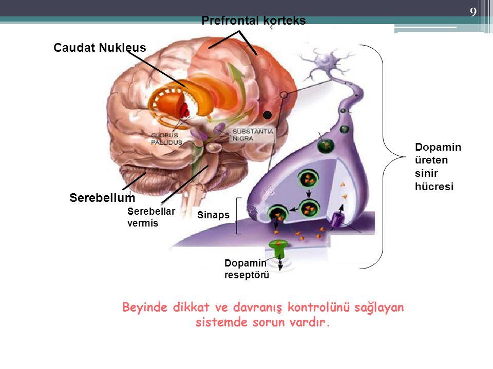9 Caudat Nukleus Prefrontal korteks Serebellum Dopamin üreten sinir hücresi Dopamin reseptörü Sinaps Serebellar vermis Beyinde dikkat ve davranış kont