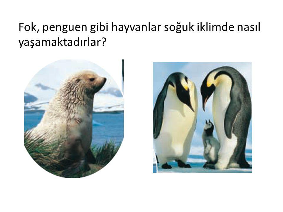Fok, penguen gibi hayvanlar soğuk iklimde nasıl yaşamaktadırlar?
