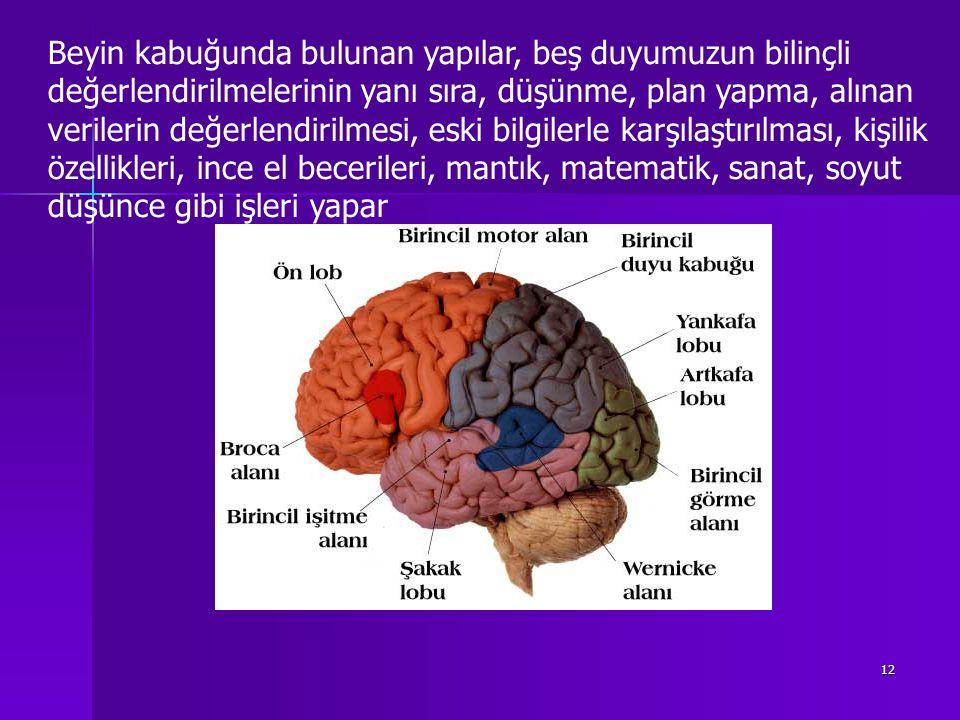 11 Kimi Bilim Adamlarına Göre Öğrenme Beyinde Gerçekleşen Nörofizyolojik Bir Olaydır
