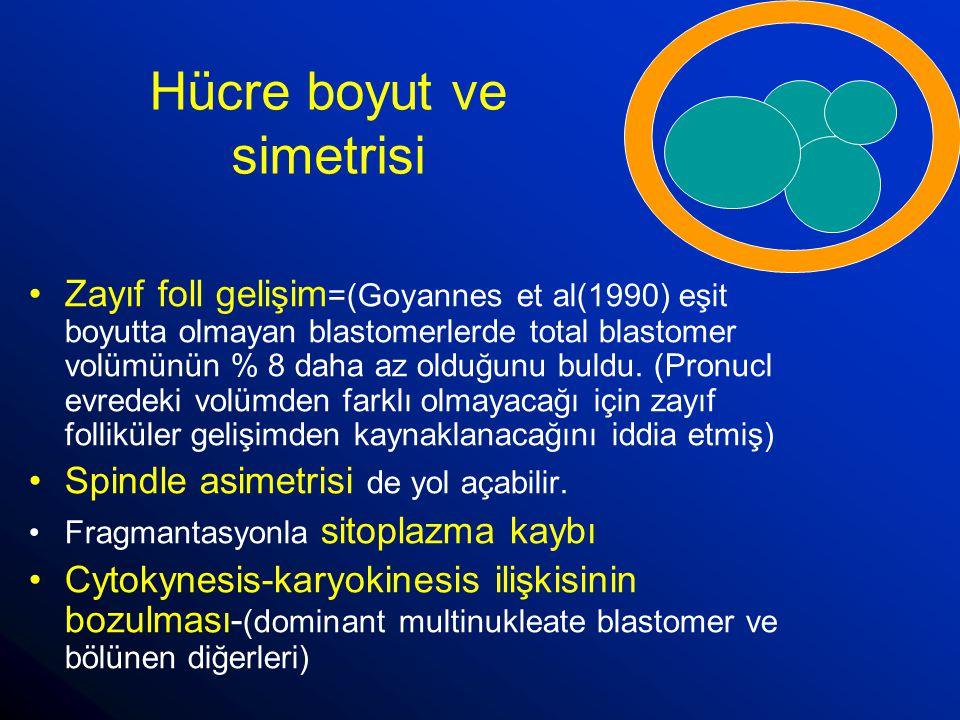 Hücre boyut ve simetrisi Zayıf foll gelişim =(Goyannes et al(1990) eşit boyutta olmayan blastomerlerde total blastomer volümünün % 8 daha az olduğunu
