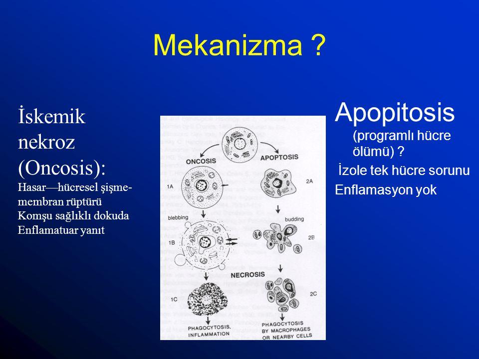 Mekanizma ? Apopitosis (programlı hücre ölümü) ? İzole tek hücre sorunu Enflamasyon yok İskemik nekroz (Oncosis): Hasar—hücresel şişme- membran rüptür