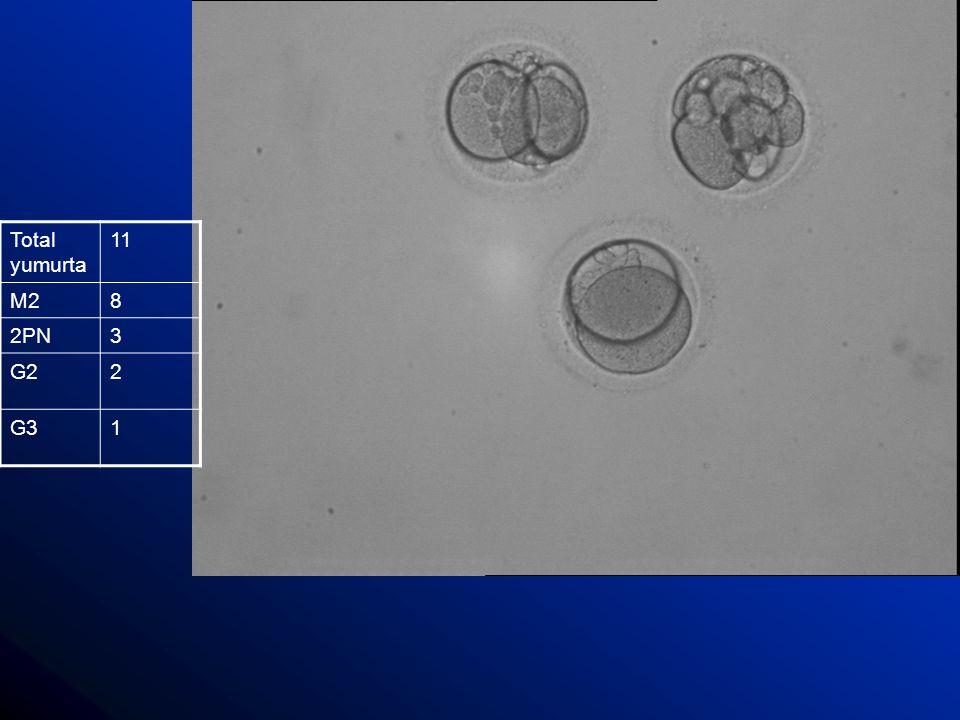 Sitoplazmik fragmantasyon Erken evre embriyolarda sıkça görülen bir durum: Bir cohort grubu içinde bütün embriyoları-bir kısmını alabilir.