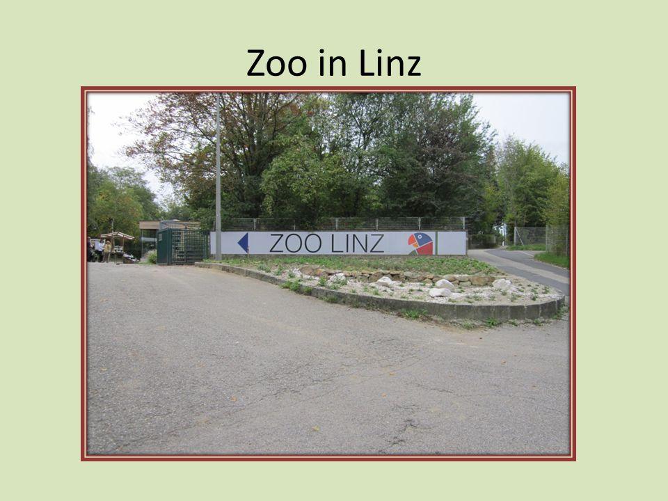 Zoo Küçük ama güzel bir hayvanat bahçesi… Aktivpass ile giriş yapabilirsin fiyatı da gayet uygundur.