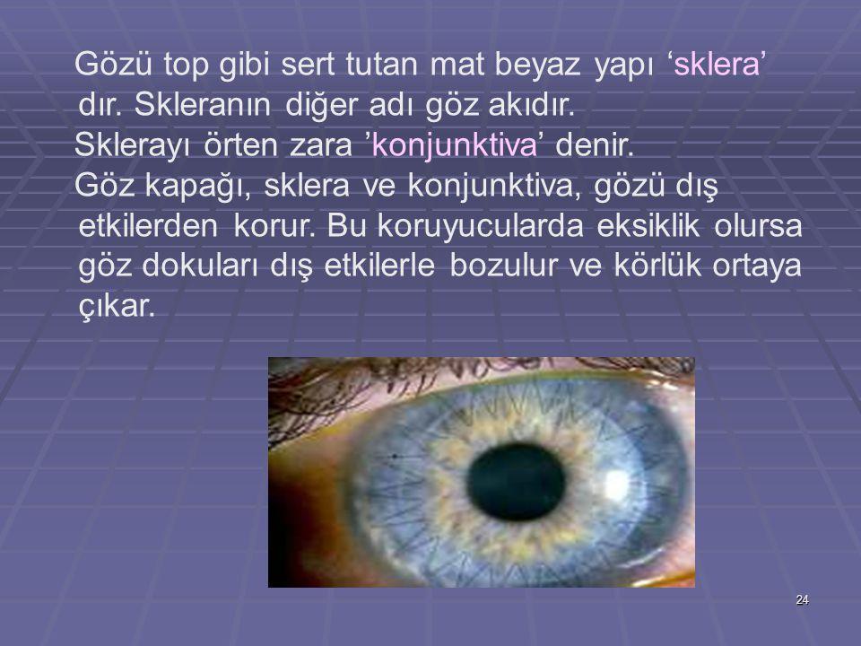 24 Gözü top gibi sert tutan mat beyaz yapı 'sklera' dır. Skleranın diğer adı göz akıdır. Sklerayı örten zara 'konjunktiva' denir. Göz kapağı, sklera v