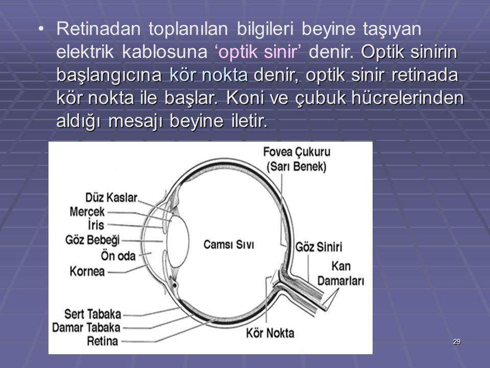 29 Optik sinirin başlangıcına kör nokta denir, optik sinir retinada kör nokta ile başlar. Koni ve çubuk hücrelerinden aldığı mesajı beyine iletir.Reti