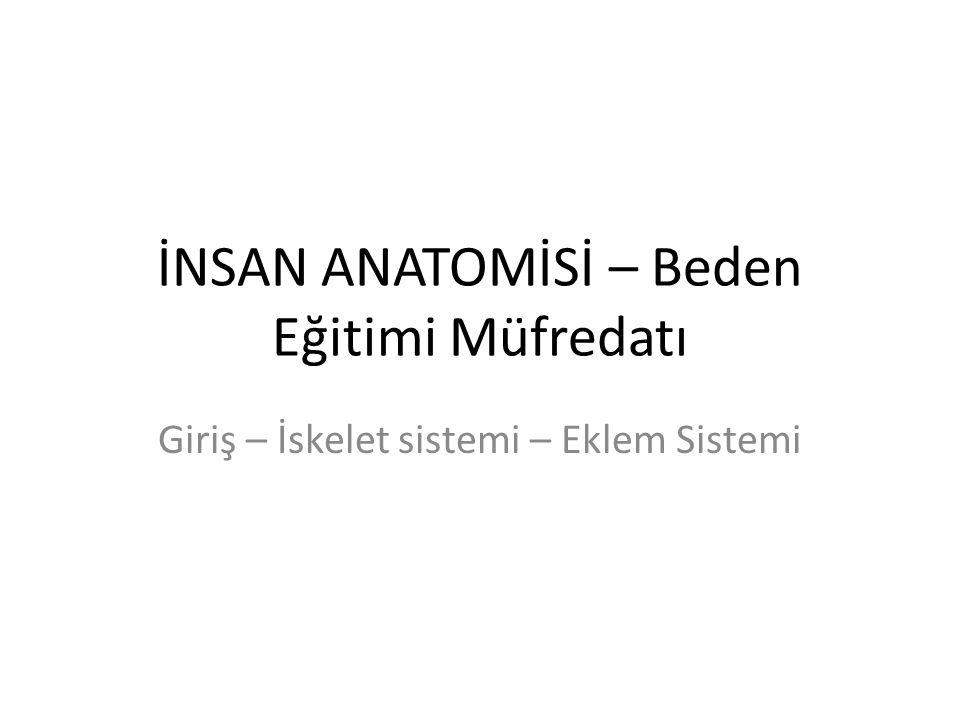 İNSAN ANATOMİSİ – Beden Eğitimi Müfredatı Giriş – İskelet sistemi – Eklem Sistemi