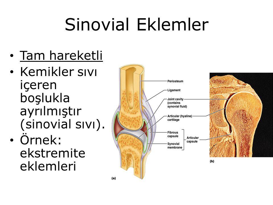 Sinovial Eklemler Tam hareketli Kemikler sıvı içeren boşlukla ayrılmıştır (sinovial sıvı). Örnek: ekstremite eklemleri