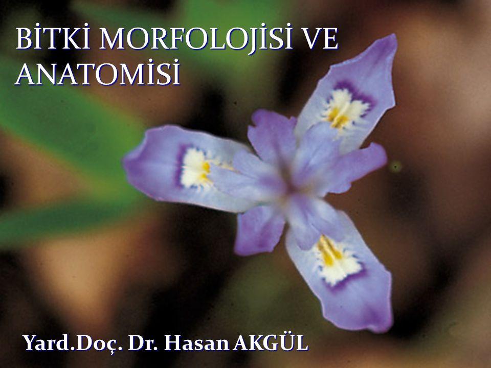 Tam bir çiçek, dıştan içe doğru Periant örtüsü (kaliks, korolla) ve Eşey organları (androkeum, ginekeum) halkalarından meydana gelmiştir.