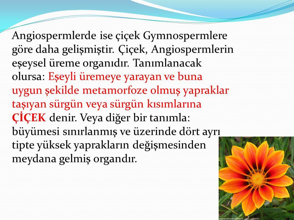 Angiospermlerde ise çiçek Gymnospermlere göre daha gelişmiştir. Çiçek, Angiospermlerin eşeysel üreme organıdır. Tanımlanacak olursa: Eşeyli üremeye ya