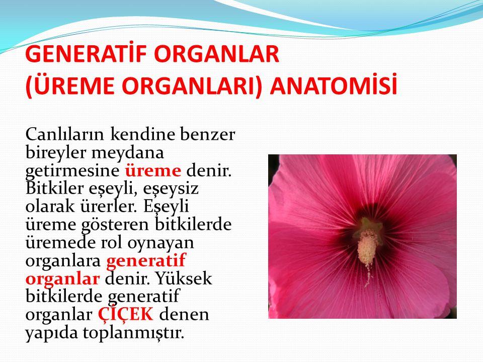 GENERATİF ORGANLAR (ÜREME ORGANLARI) ANATOMİSİ Canlıların kendine benzer bireyler meydana getirmesine üreme denir. Bitkiler eşeyli, eşeysiz olarak üre