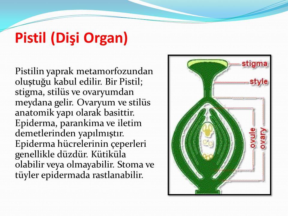 Pistil (Dişi Organ) Pistilin yaprak metamorfozundan oluştuğu kabul edilir. Bir Pistil; stigma, stilüs ve ovaryumdan meydana gelir. Ovaryum ve stilüs a