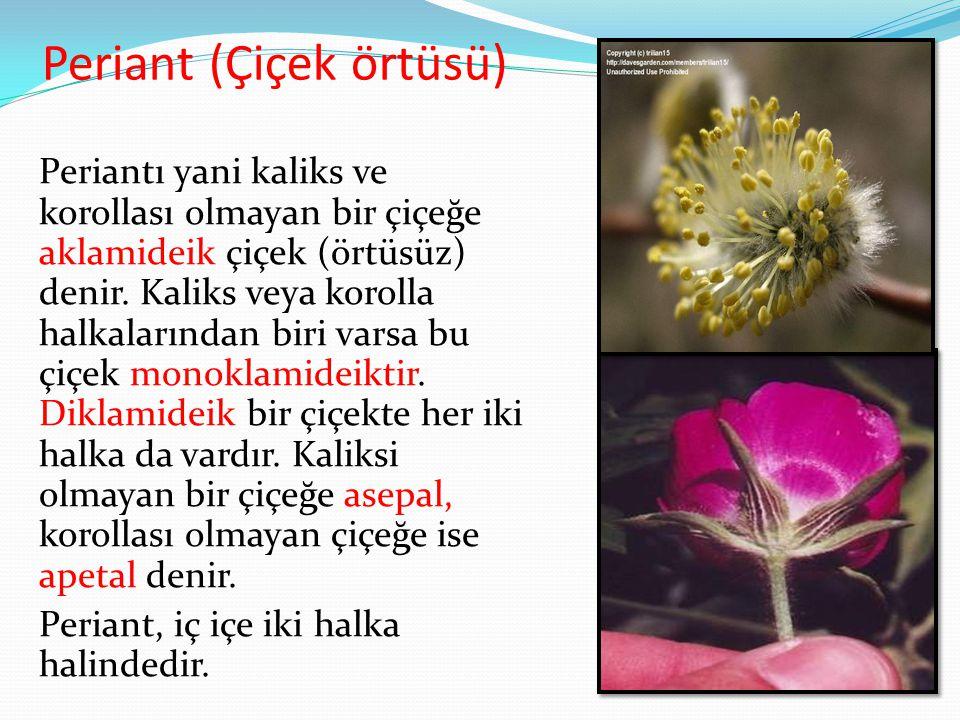 Periant (Çiçek örtüsü) Periantı yani kaliks ve korollası olmayan bir çiçeğe aklamideik çiçek (örtüsüz) denir. Kaliks veya korolla halkalarından biri v