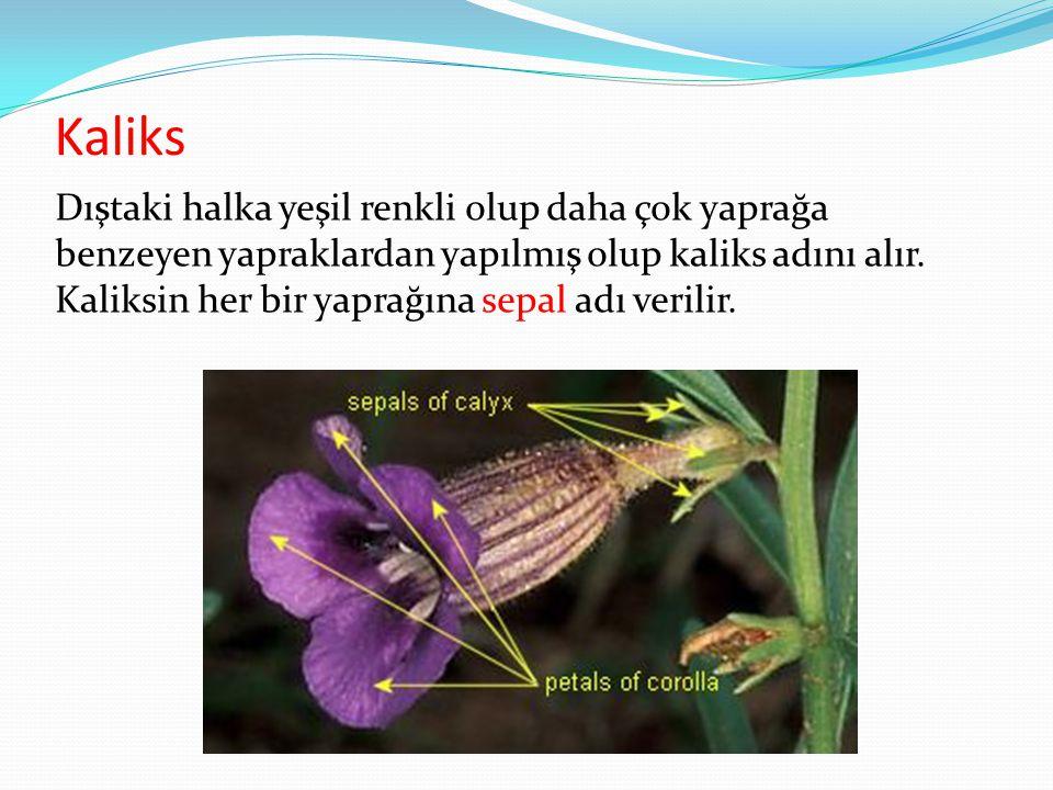 Kaliks Dıştaki halka yeşil renkli olup daha çok yaprağa benzeyen yapraklardan yapılmış olup kaliks adını alır. Kaliksin her bir yaprağına sepal adı ve