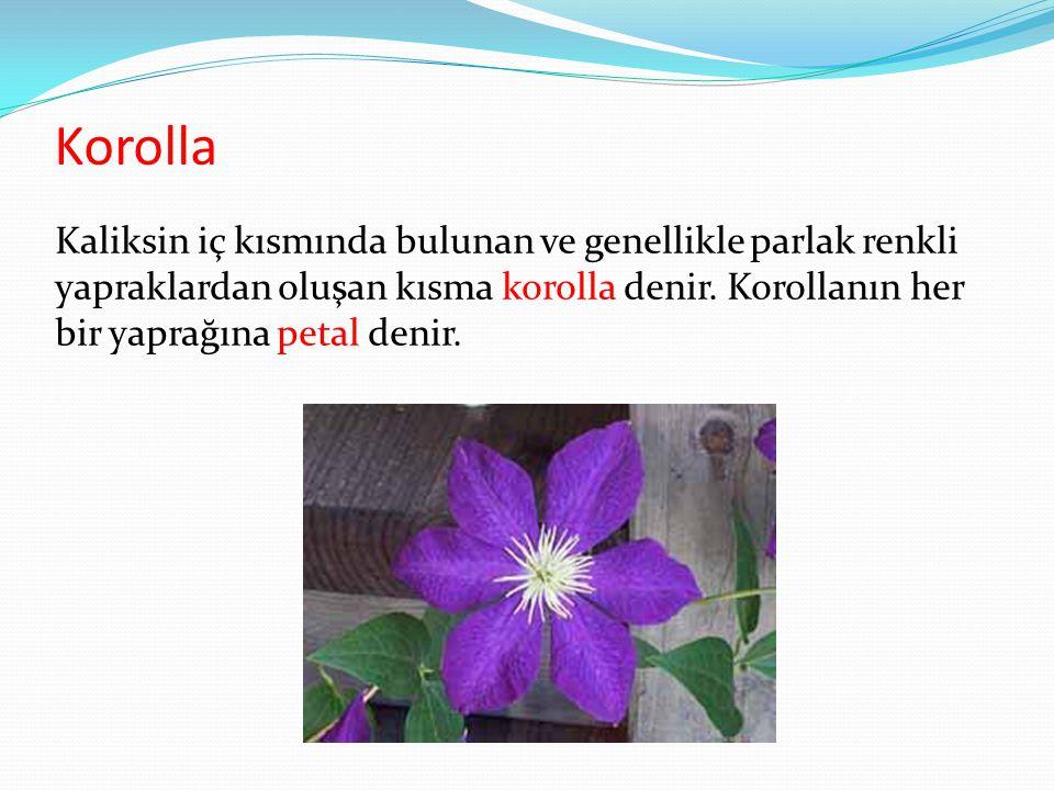 Korolla Kaliksin iç kısmında bulunan ve genellikle parlak renkli yapraklardan oluşan kısma korolla denir. Korollanın her bir yaprağına petal denir.