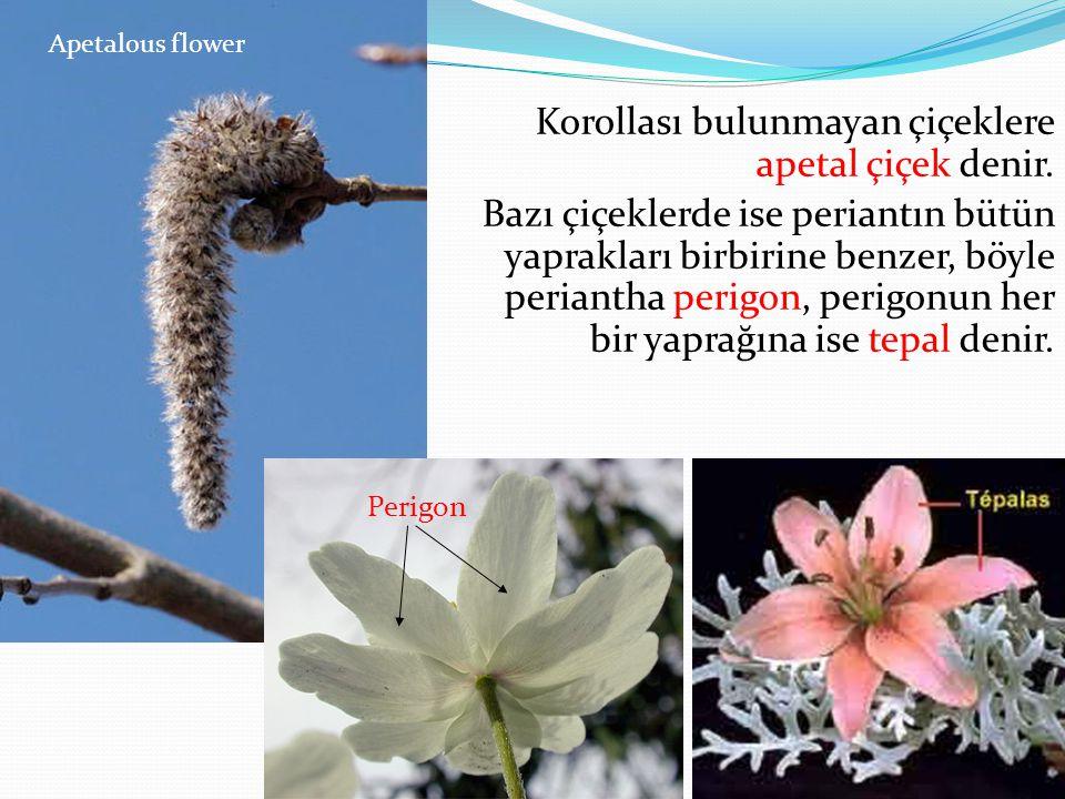 Korollası bulunmayan çiçeklere apetal çiçek denir. Bazı çiçeklerde ise periantın bütün yaprakları birbirine benzer, böyle periantha perigon, perigonun
