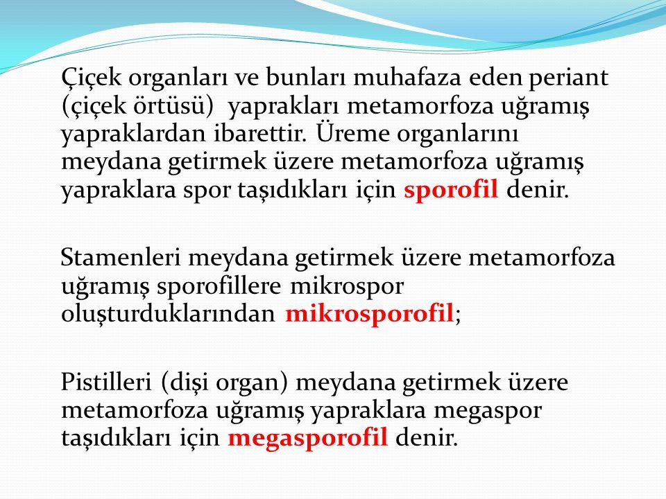 Tohum taslaklarının dişi organda bulunuş şekline göre; Tohumlu Bitkiler (Spermatophyta) Gymnospermae Angiospermae (Açık tohumlular) (Kapalı tohumlular) olarak iki alt bölüme ayrılarak incelenir.
