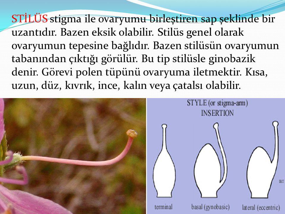 STİLÜS stigma ile ovaryumu birleştiren sap şeklinde bir uzantıdır. Bazen eksik olabilir. Stilüs genel olarak ovaryumun tepesine bağlıdır. Bazen stilüs