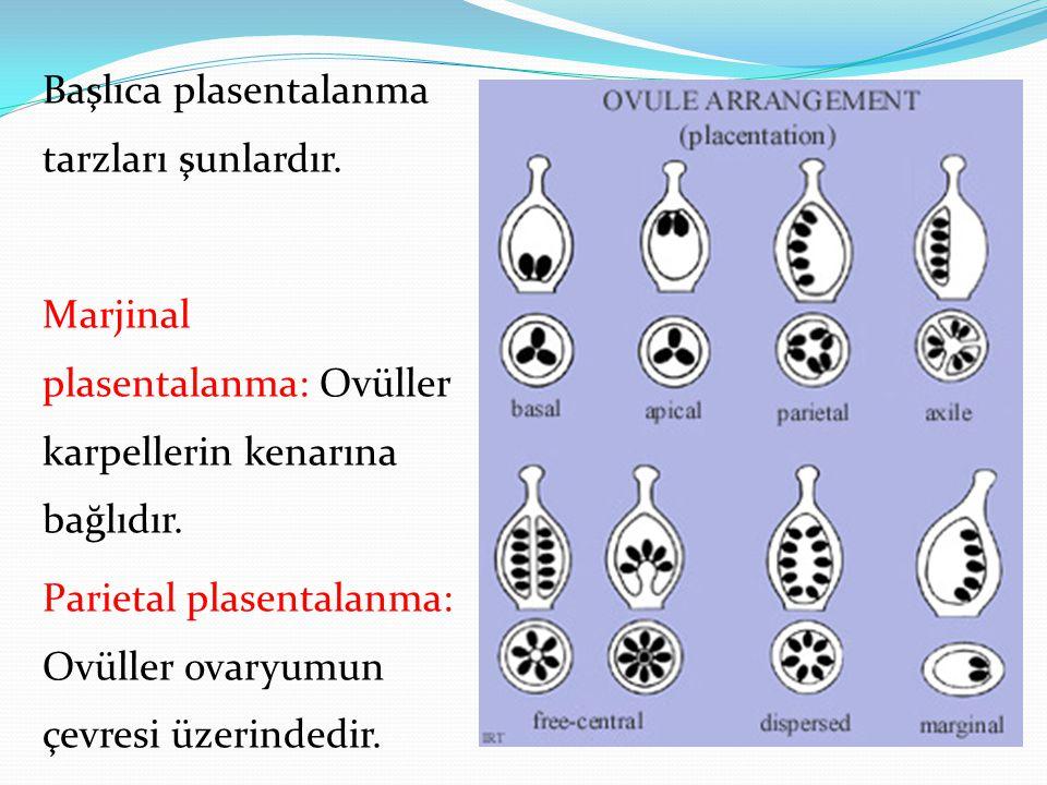 Başlıca plasentalanma tarzları şunlardır. Marjinal plasentalanma: Ovüller karpellerin kenarına bağlıdır. Parietal plasentalanma: Ovüller ovaryumun çev