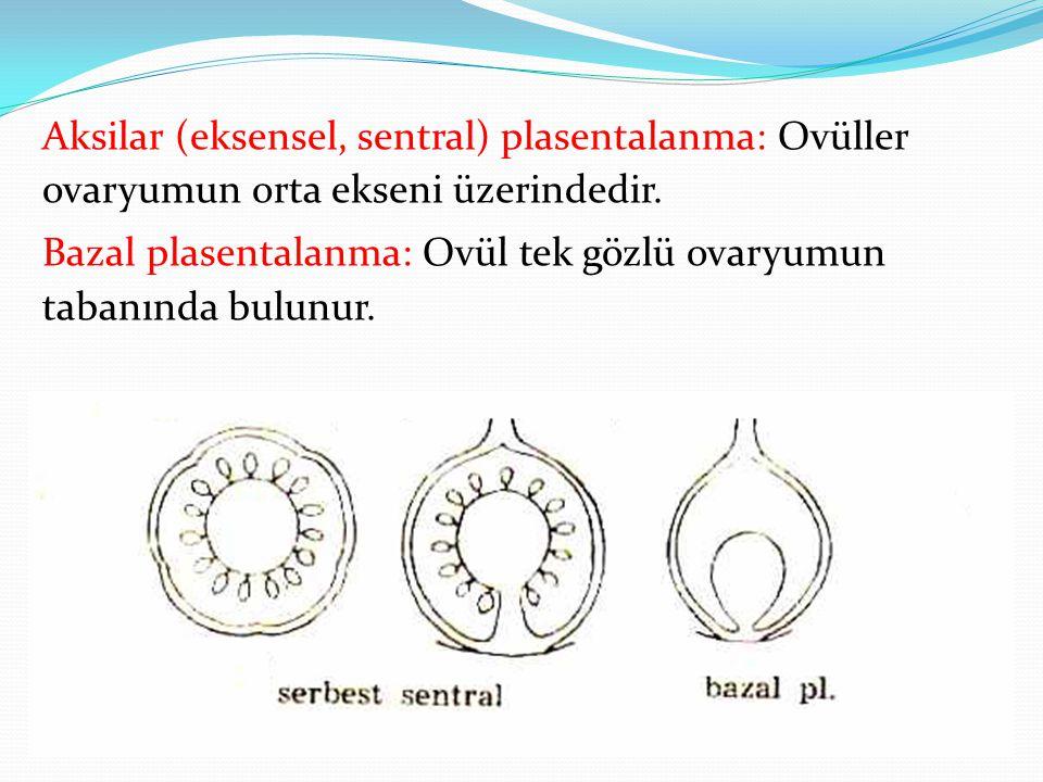 Aksilar (eksensel, sentral) plasentalanma: Ovüller ovaryumun orta ekseni üzerindedir. Bazal plasentalanma: Ovül tek gözlü ovaryumun tabanında bulunur.