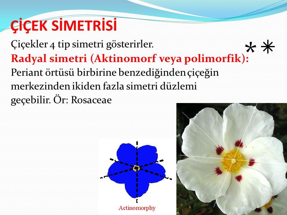ÇİÇEK SİMETRİSİ Çiçekler 4 tip simetri gösterirler. Radyal simetri (Aktinomorf veya polimorfik): Periant örtüsü birbirine benzediğinden çiçeğin merkez