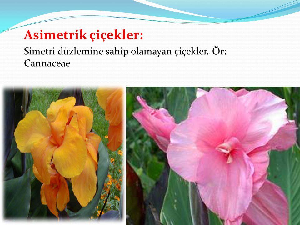 Asimetrik çiçekler: Simetri düzlemine sahip olamayan çiçekler. Ör: Cannaceae