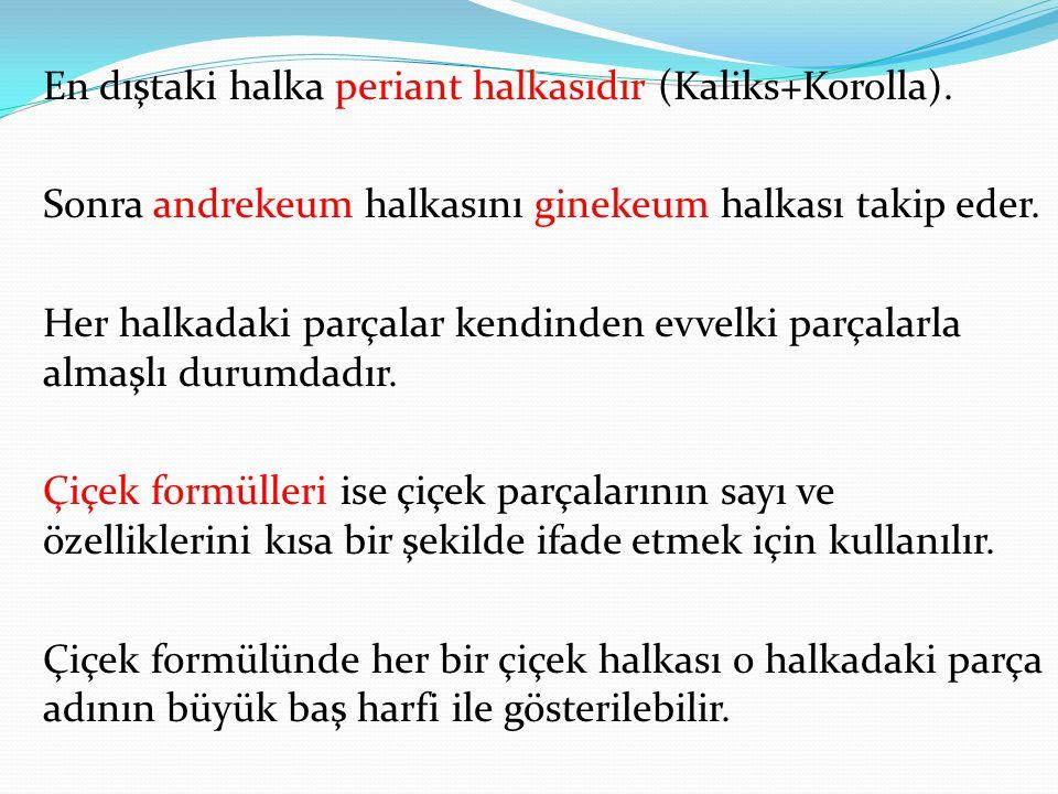 periant halkasıdır En dıştaki halka periant halkasıdır (Kaliks+Korolla). ndrekeumginekeum Sonra andrekeum halkasını ginekeum halkası takip eder. Her h