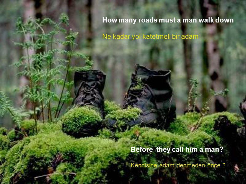 How many roads must a man walk down Ne kadar yol katetmeli bir adam Before they call him a man.