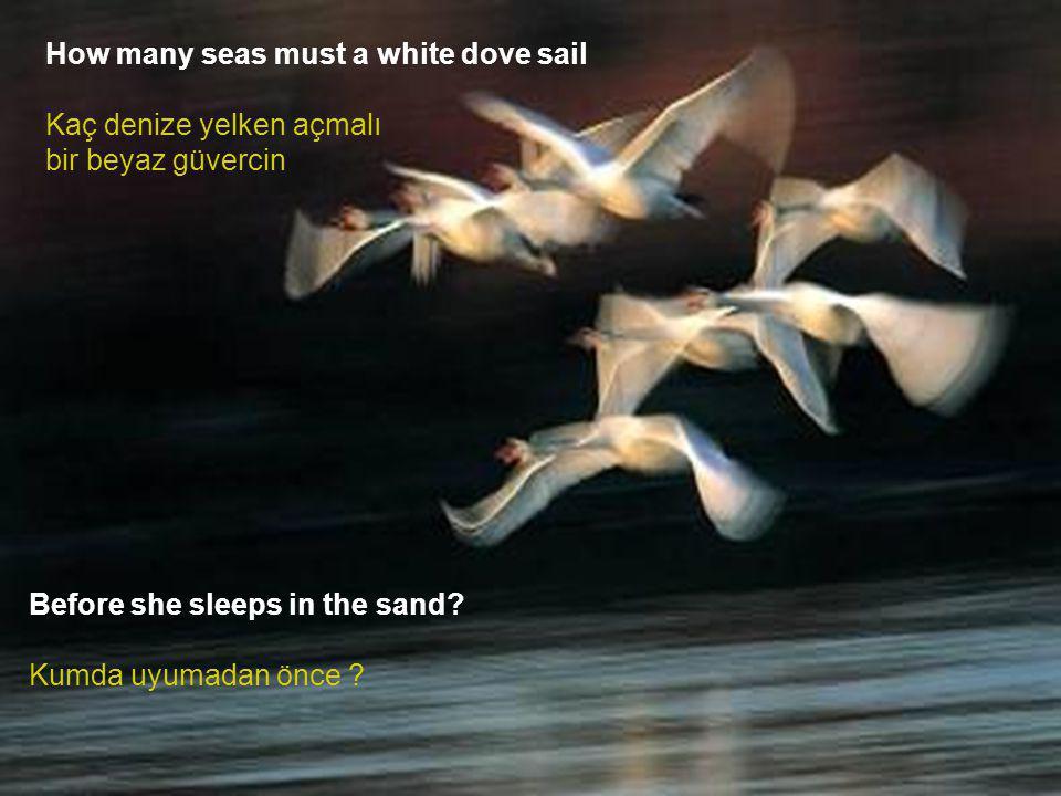 How many seas must a white dove sail Kaç denize yelken açmalı bir beyaz güvercin Before she sleeps in the sand.