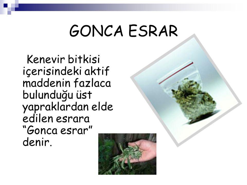 """GONCA ESRAR Kenevir bitkisi içerisindeki aktif maddenin fazlaca bulunduğu üst yapraklardan elde edilen esrara """"Gonca esrar"""" denir."""