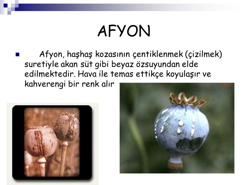 AFYON Afyon, haşhaş kozasının çentiklenmek (çizilmek) suretiyle akan süt gibi beyaz özsuyundan elde edilmektedir. Hava ile temas ettikçe koyulaşır ve
