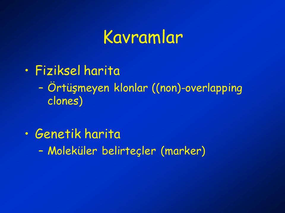 Kavramlar Fiziksel harita –Örtüşmeyen klonlar ((non)-overlapping clones) Genetik harita –Moleküler belirteçler (marker)
