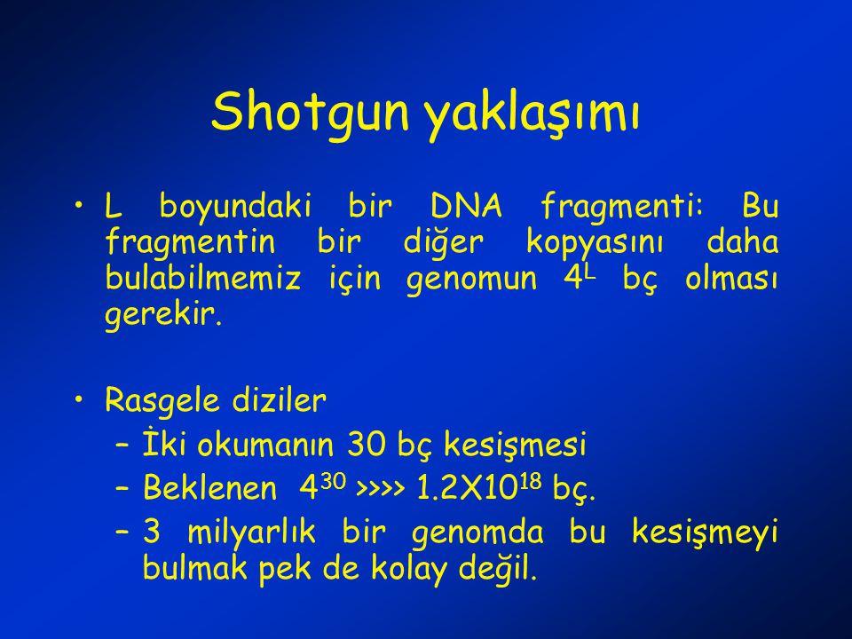 Shotgun yaklaşımı L boyundaki bir DNA fragmenti: Bu fragmentin bir diğer kopyasını daha bulabilmemiz için genomun 4 L bç olması gerekir.